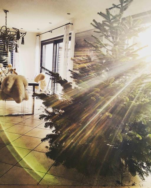 CtC 2018: Kaufen, selber schlagen oder liefern lassen - Mission Weihnachtsbaum: So gehts!