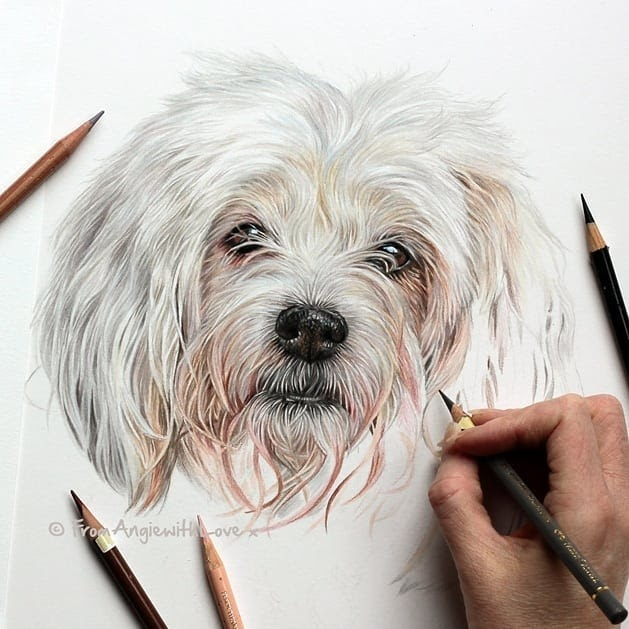 07-Coton-de-Tulear-Angie-Cats-Dogs-and-an-Owl-Pencil-Drawings-www-designstack-co