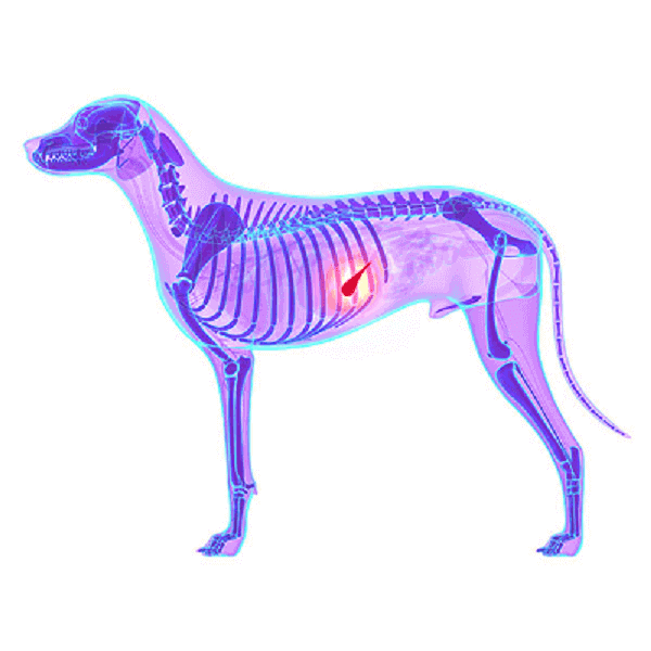 treatment choices for canine pancreatitis