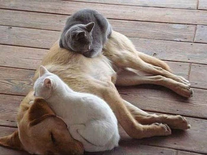 Funny animals of the week - 25 March 2016, animal best photos, cute animal pictures