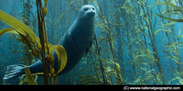 La Huella Curiosa: Focas y leones marinos. Parecidos pero no iguales