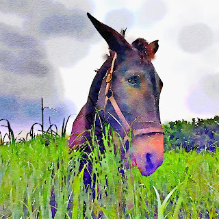 Watercolor of our mule, Doc.