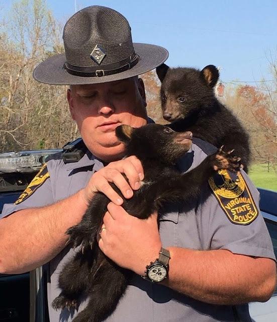 Esse policial salvou os ursos