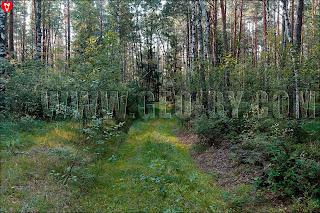 Непроездное место за хутором Дупляны