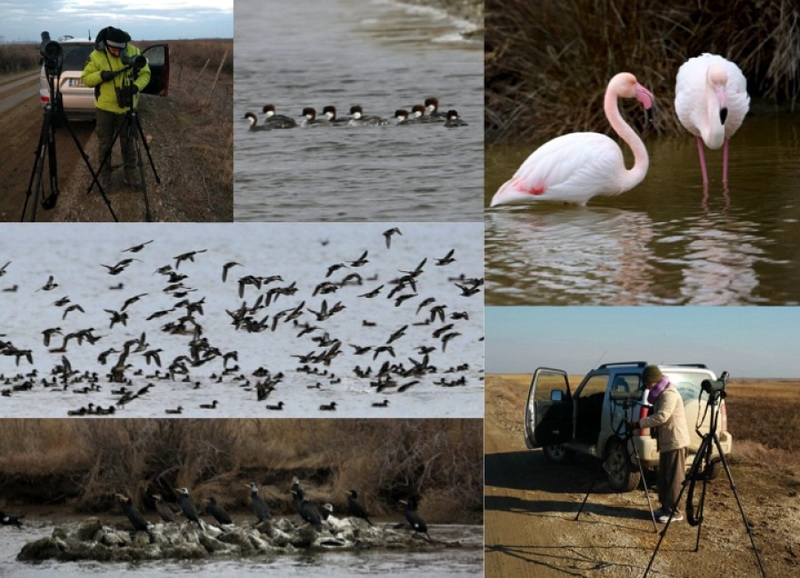139 χιλιάδες πουλιά καταμετρήθηκαν στο Δέλτα Έβρου