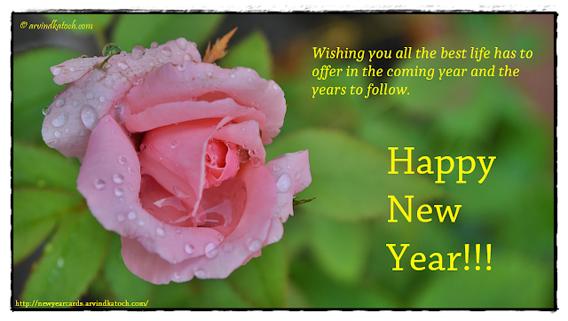 Pink Rose, New Year Card, Best Life, Offer, Coming Year, Years,