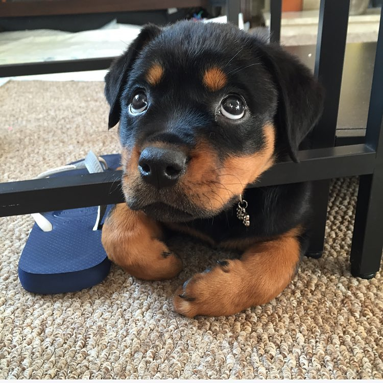 Cute dogs - part 176, cute dog images, best funny dog pictures