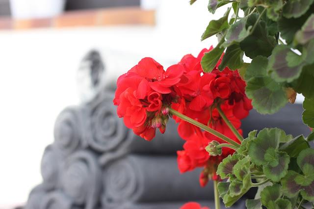 Fleecedecken, Herbsthochzeit in den Bergen von Garmisch-Partenkirchen, Hochzeitslocation in Bayern, Riessersee Hotel - Bordeaux, rote Rosen, herbstlich