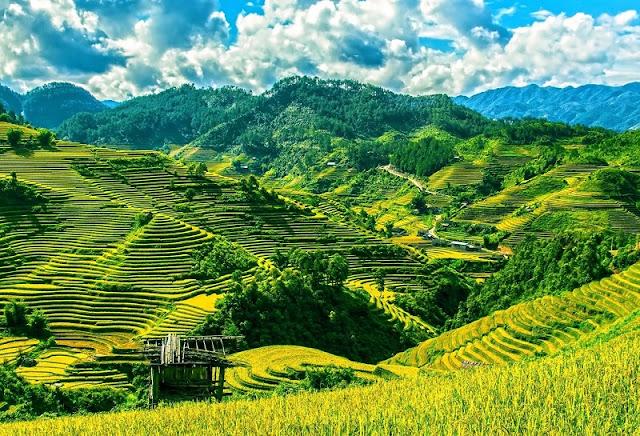 September - rice season is ripe - picturesque Northwest scenery 2