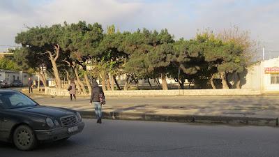 """Sabunçu Rayon İcra Hakimiyyətinin başçısının """"soyqırımı əməliyyatı"""""""