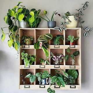 Roślinny trend w domu