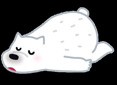 Shirokuma sleep