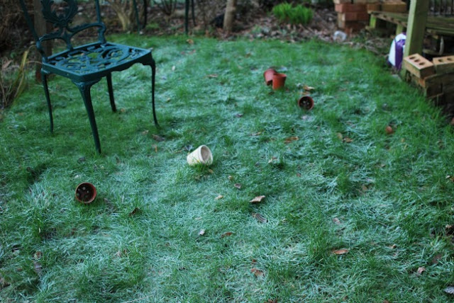 frosty grass and a chair and more flower pots