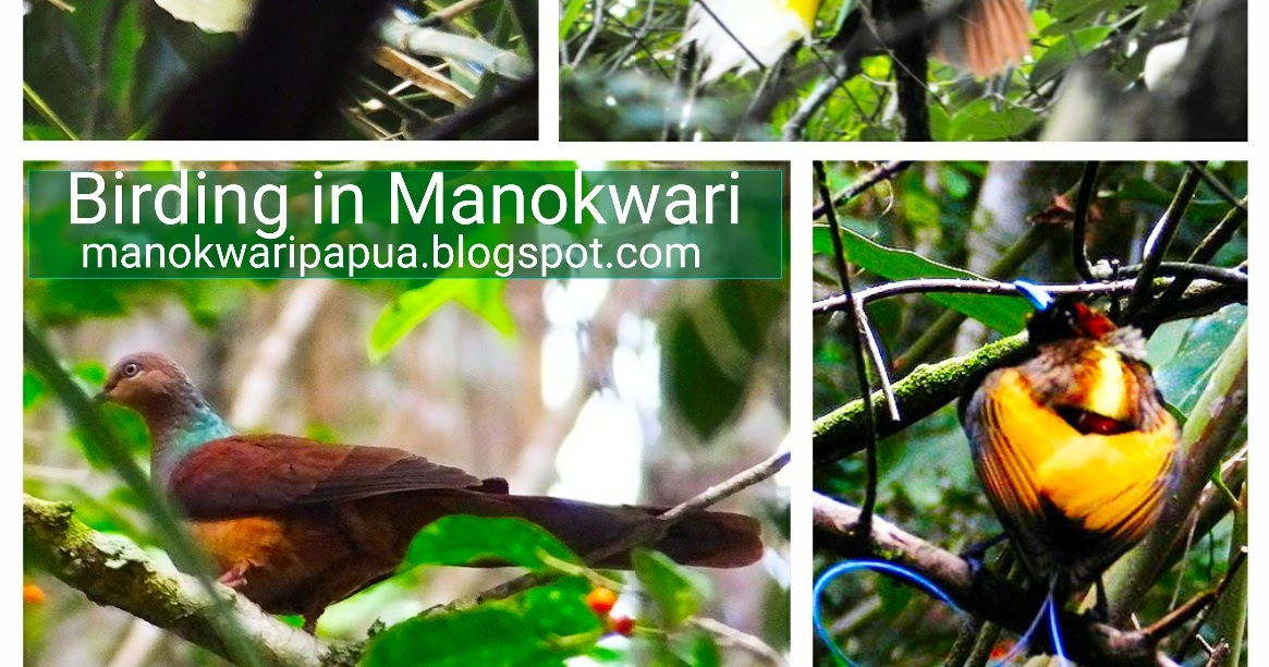 Wildlife protection and trafficking assessment in kenya: Birding Paradise In Rainforest Birdwatching In Montane Forest Of Manokwari