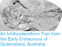 http://sciencythoughts.blogspot.co.uk/2013/09/an-ichthyodectiform-fish-from-early.html