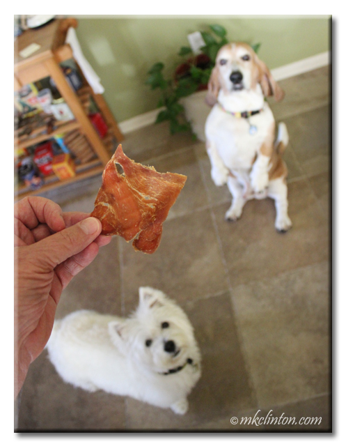 Two dogs looking at jerky treats