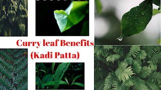 Kadi Patta Benefits For Diabetes