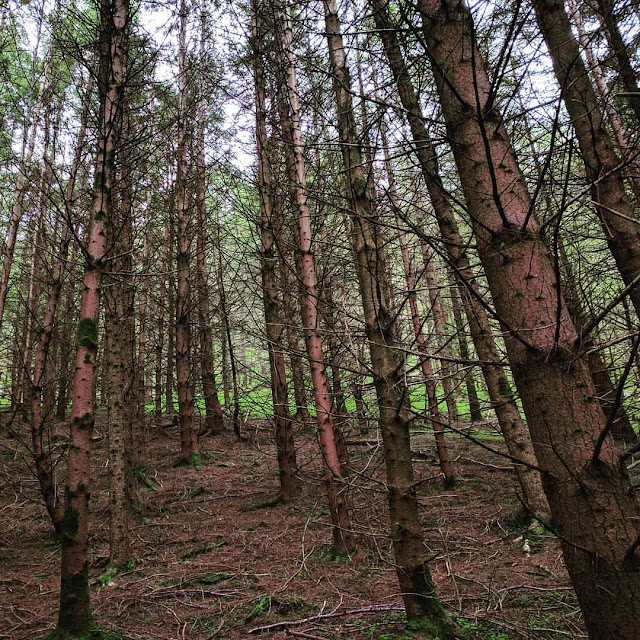 Wicklow Mountains Tour - The forested path of St. Kevin's Way in Glendalough