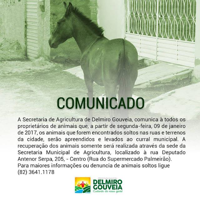 Secretaria de Agricultura de Delmiro Gouveia, realizará a apreensão de animais soltos nas ruas  e terrenos para o curral municipal
