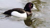 Bird Newcastle Park