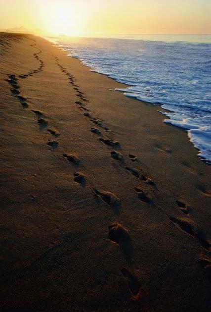 Trace De Pas Dans Le Sable : trace, sable, Textes, Vent:, Sable, Ademar, Barros