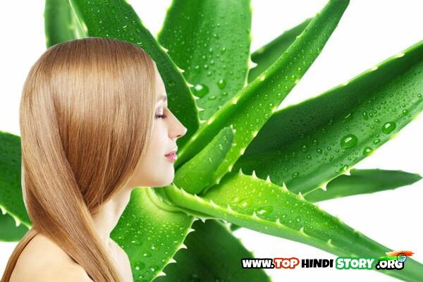 Aloe Vera Use for hair In Hindi