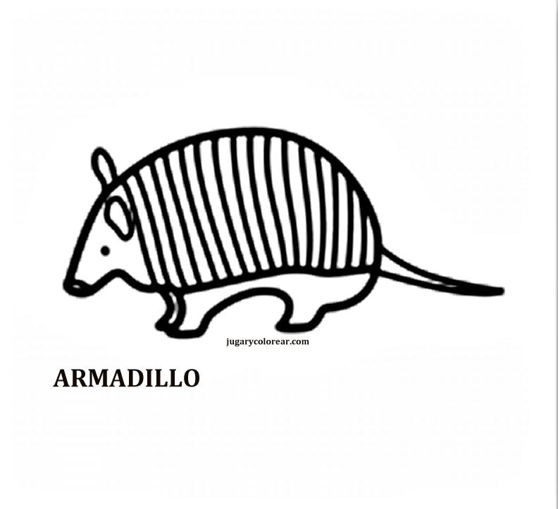 Fauna chilena para colorear