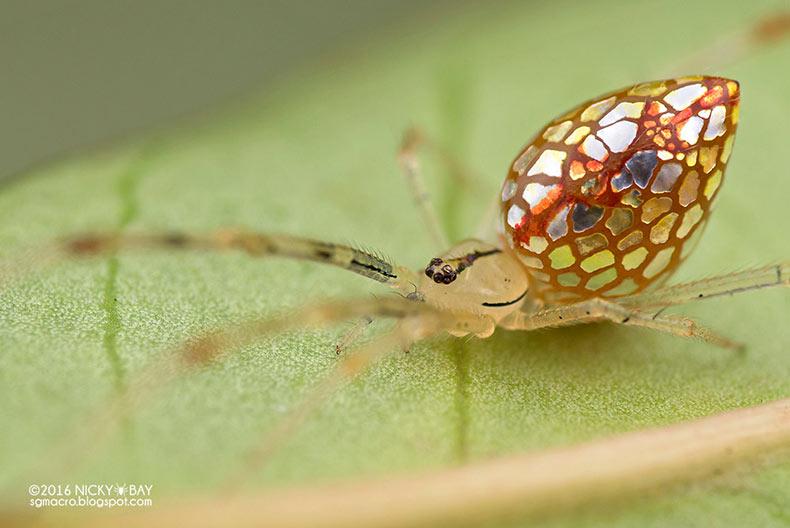 El fotógrafo Nicky Bay documenta arañas espejo ajustando sus placas de plata para que aparescan más reflexivo
