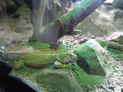 Cabaña de los Reptiles