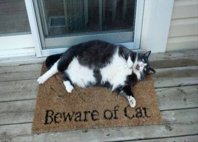 Funny cats - part 329, cute cat images, best funny cat photo