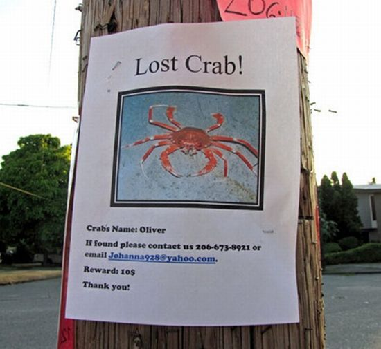 30 Funniest Lost and Found Pet Signs ~ Damn Cool Pictures