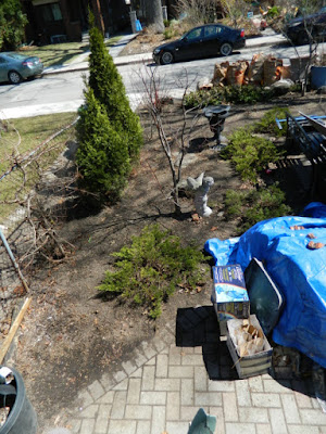 Runnymede Toronto Front Yard Spring Cleanup After by Paul Jung Gardening Services--a Toronto Organic Gardening Company