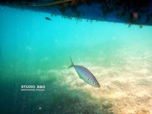Η φωτογραφία της ημέρας: Τα ψάρια του καλοκαιριού