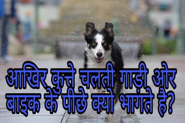 Why do dogs run behind cars? आखिर चलती गाड़ी और बाइक के पीछे क्यों भागते हे कुत्ते?