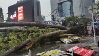 angin kencang tumbangkan pepohonan