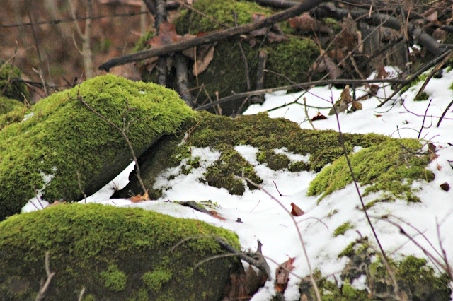 Enjoying how the snow makes the forest colours brighten