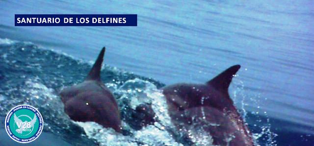 IMAGEN Santuario de los delfines