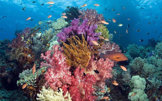 Foto van tropische vissen onderwater op de zeebodem