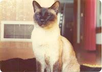 chester-kedi