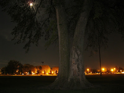night photo tree and moon
