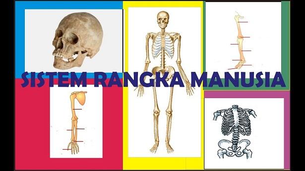 49++ Rangka tubuh manusia dibagi menjadi 3 yaitu trends