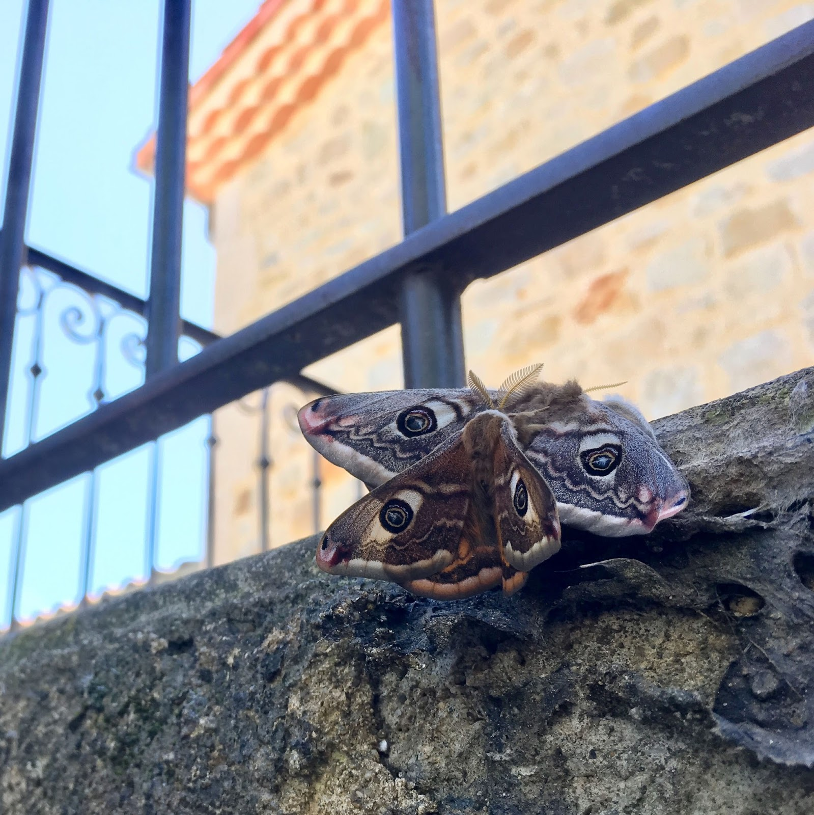 Scorpion mâle datant poissons femelle