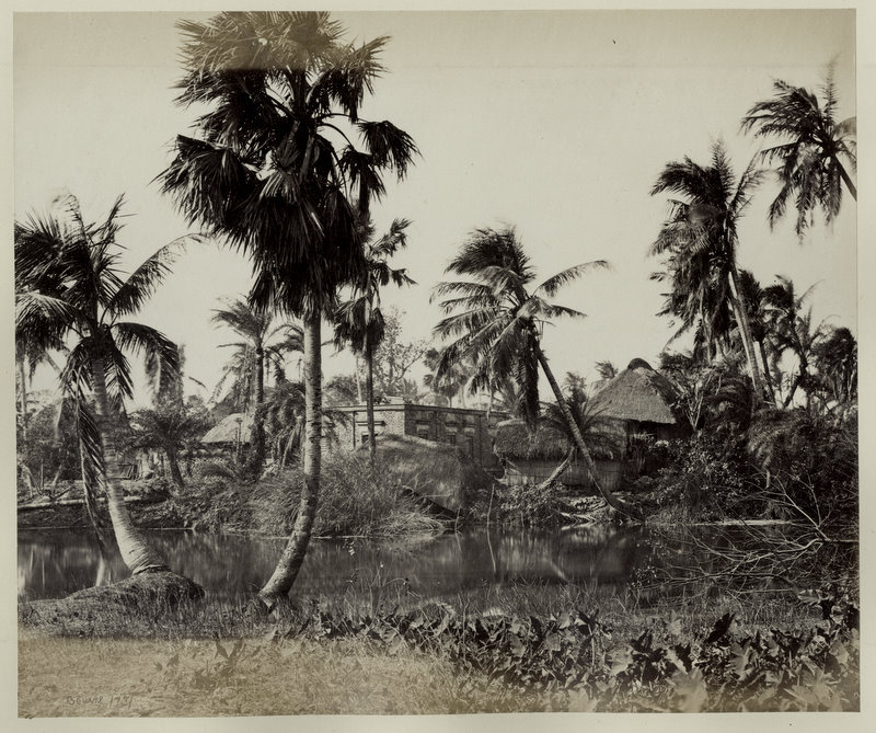 Vintage Photograph of a Village in Bengal - 1860's