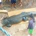 Crocodilo com quase 5m é capturado nas Filipinas