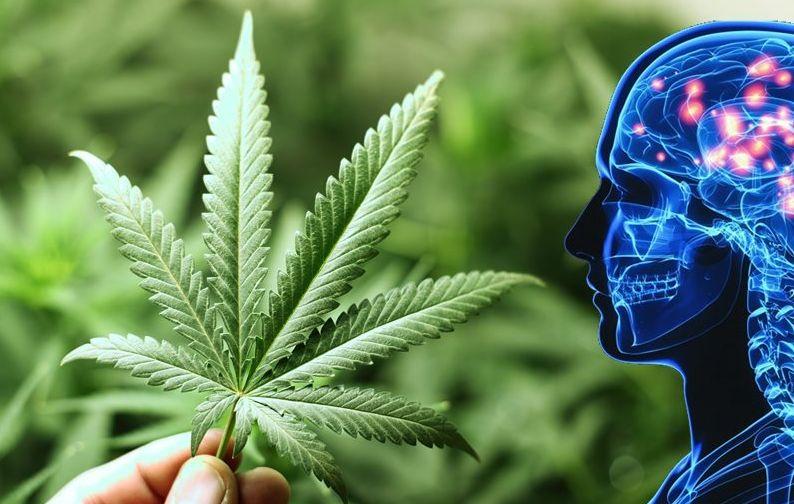 Orvosi Kannabisz mint új Innovatív Gyógykezelés Európában