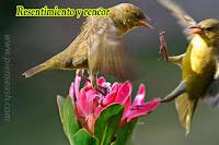 Aves peleando sobre una hermosa flor