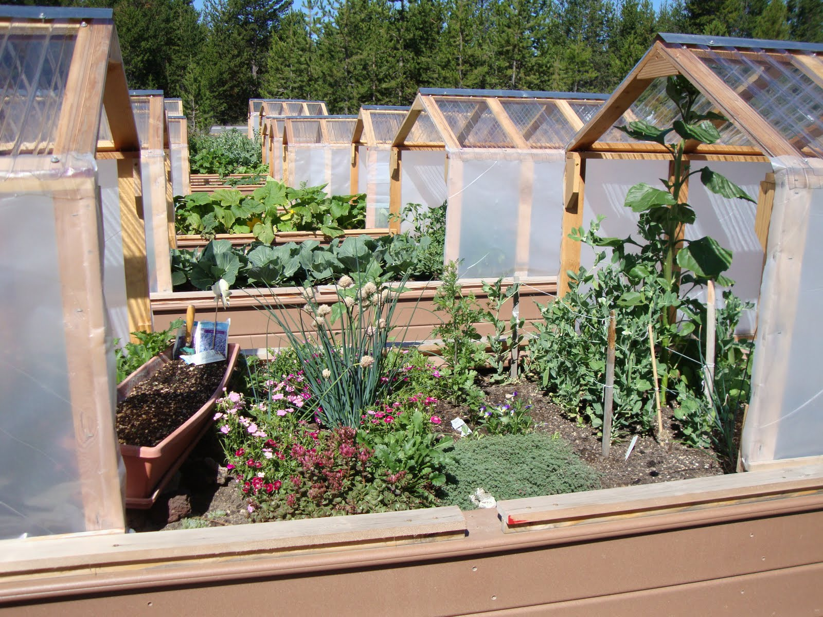 On Top Of Raised Beds
