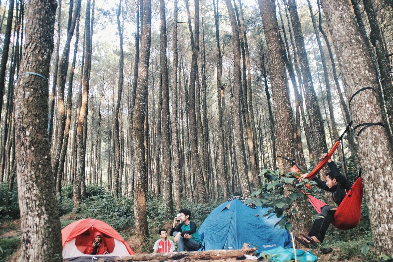 Dekat Jakarta: Melipir ke hutan pinus Loji | Kembara Bukan Fatamorgana