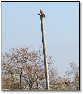 Ansitzstange für Raubvögel