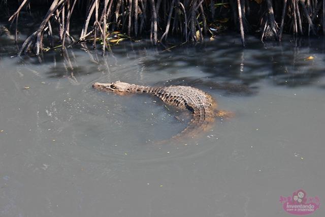 O pantanal carioca
